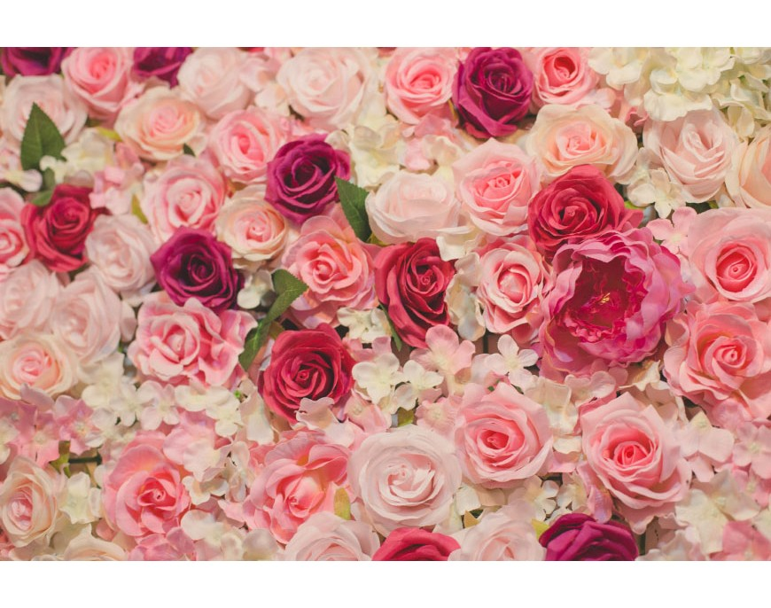 Rose Flower New Language Rose Color Meanings